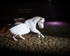 Pegasus - Weihnachtsfeier
